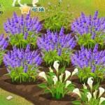 fleur feme chine