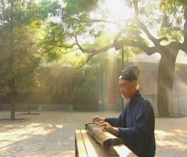 citare bambou