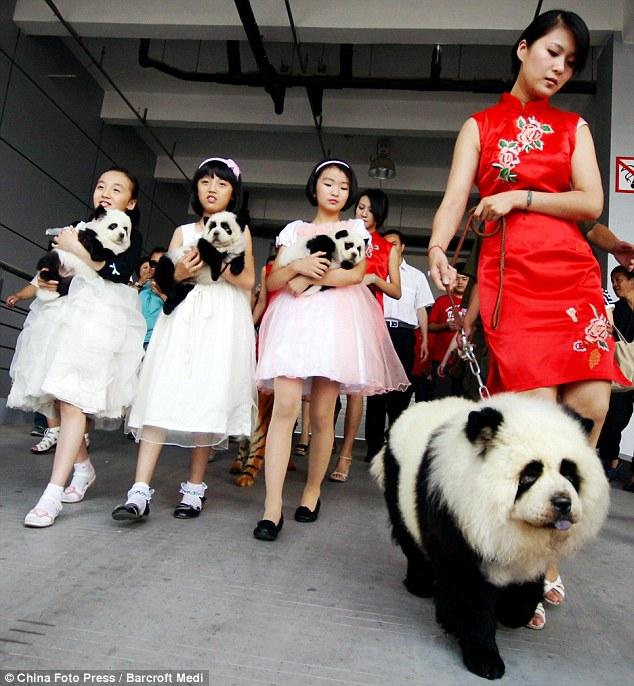 chien chine