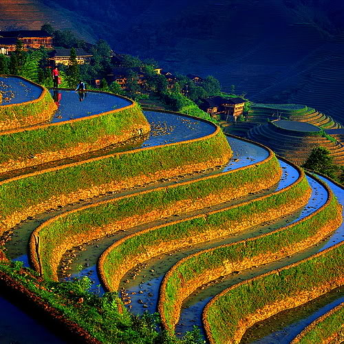 terasses rivières chine