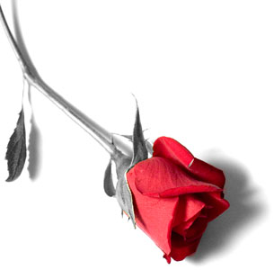 Le prix des roses en Chine pour la St Valentin