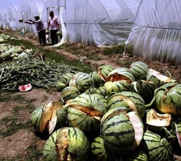 Les pastèques qui explosent en Chine