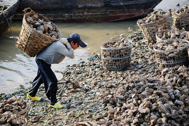 Un pêcheur chinois