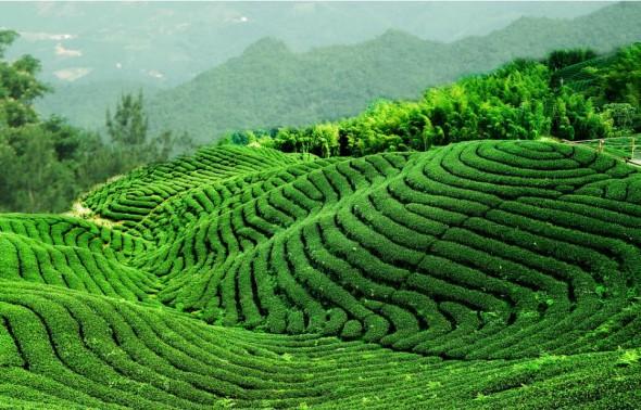 Tradition: déguster du thé en Chine