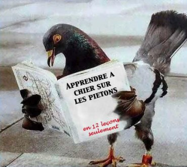 «La Belgique est le Royaume des Pigeons» pour les chinois