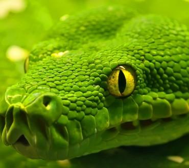 Les 10 caractéristiques du Signe du Serpent
