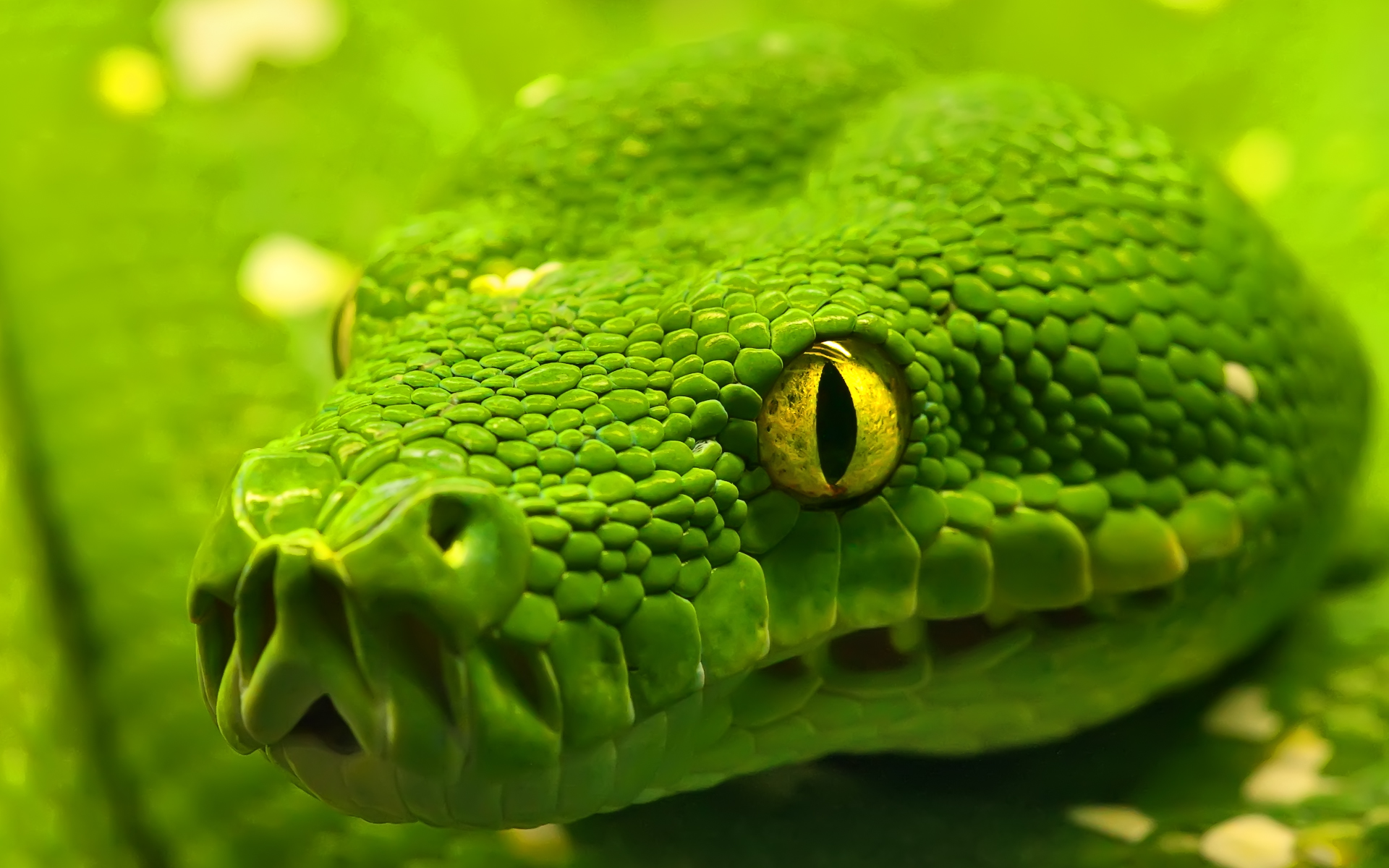 Worlds Top Ten Reptiles Desktop Backgrounds of Wild Snakes