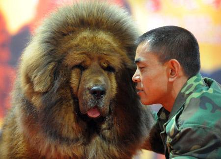 Le luxe canin à la chinoise