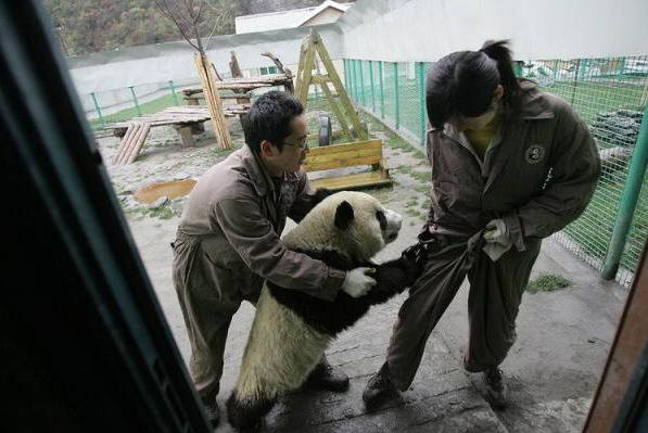 panda-chine