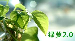 Baidu Money Plant, le nouvel algorithme de Baidu