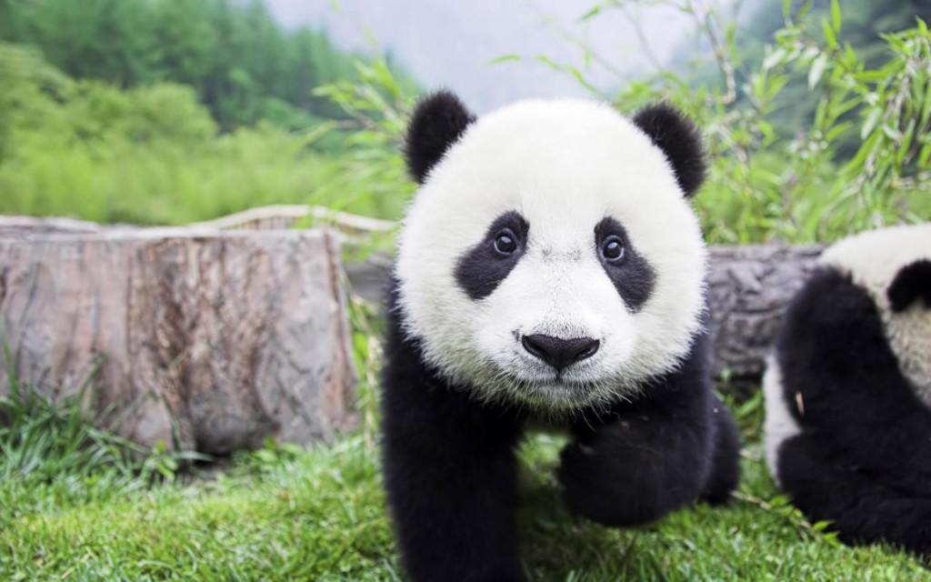 panda-geant