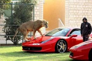 Leopard et voiture