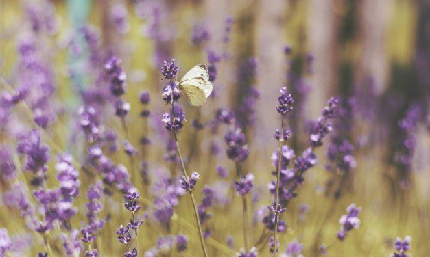 La Provence est LA destination romantique des touristes chinois