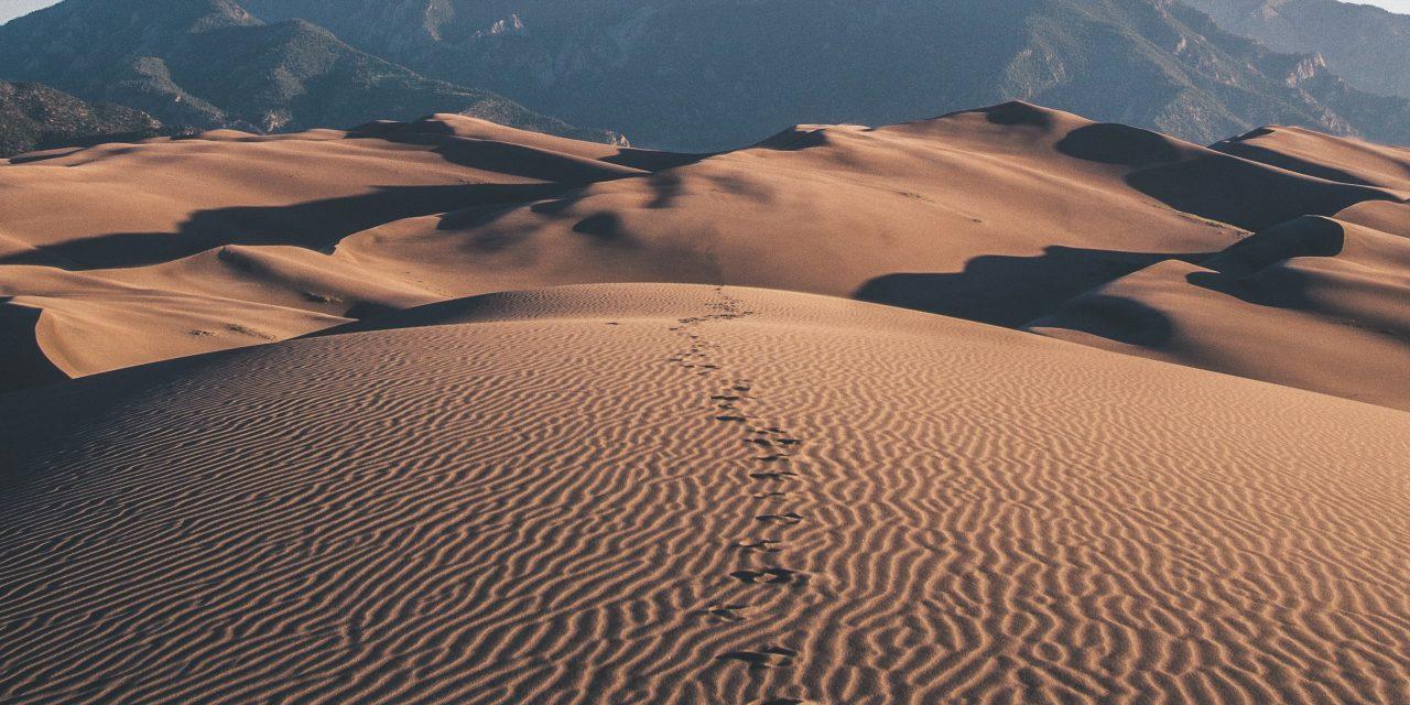 Pourquoi les chinois sont-ils fan du Sahara?