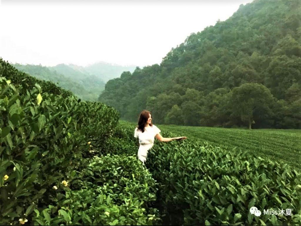 Lu Ming Tang thé