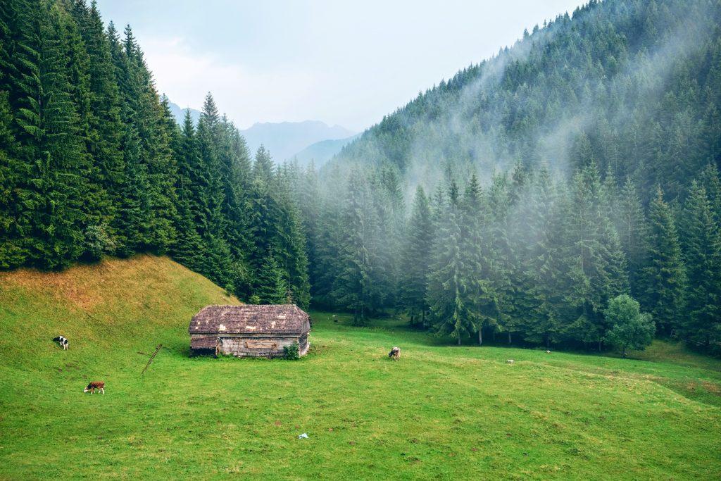 Roumanie campagne