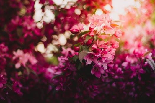 Le marché des fleurs en Chine:un marché en pleine expansion