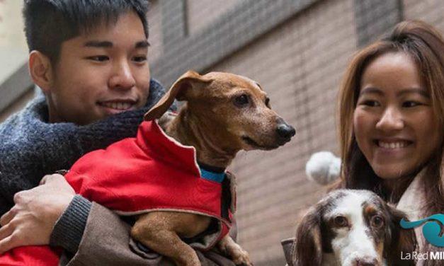Le marché des animaux de compagnie en Chine en plein boom
