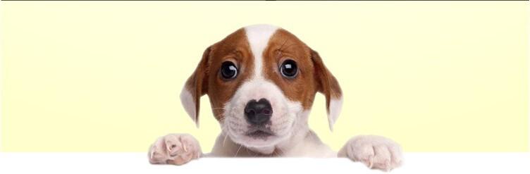 Alipay lance la reconnaissance faciale pour les animaux de compagnie
