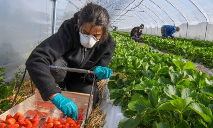 Pinduoduo souhaite révolutionner l'agriculture chinoise avec l'IA